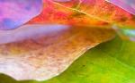 nice-leaf-1440-900-670