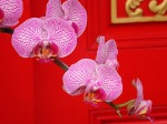 ornate-orchids-1280-960-1017